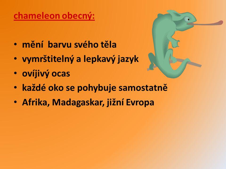 chameleon obecný: mění barvu svého těla vymrštitelný a lepkavý jazyk ovíjivý ocas každé oko se pohybuje samostatně Afrika, Madagaskar, jižní Evropa
