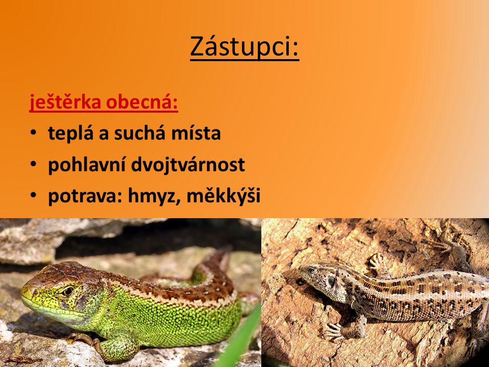 Zástupci: ještěrka obecná: teplá a suchá místa pohlavní dvojtvárnost potrava: hmyz, měkkýši