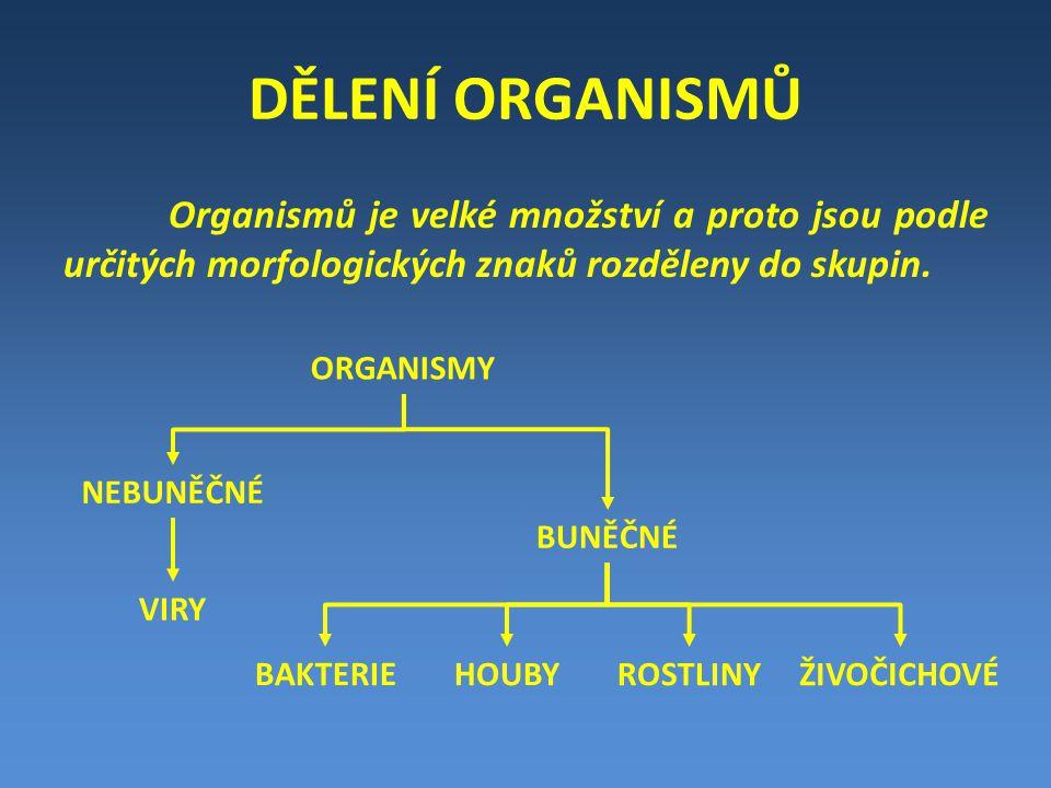 DĚLENÍ ORGANISMŮ Organismů je velké množství a proto jsou podle určitých morfologických znaků rozděleny do skupin. ORGANISMY NEBUNĚČNÉ BUNĚČNÉ VIRY BA