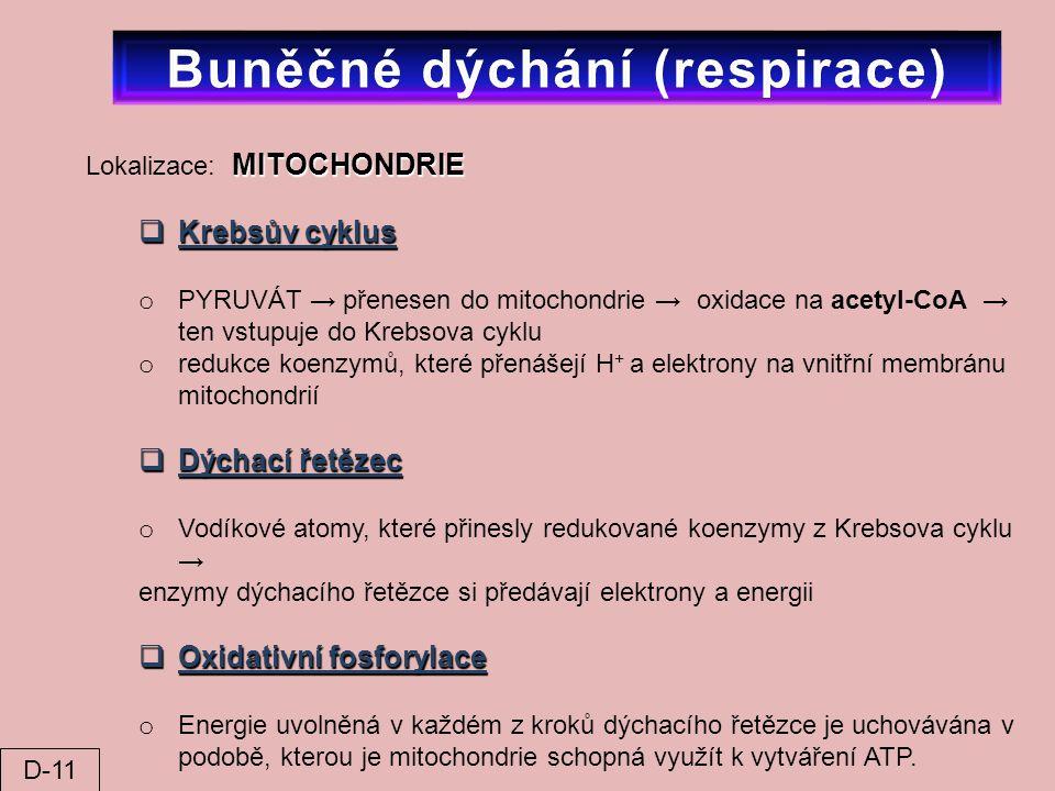 MITOCHONDRIE Lokalizace: MITOCHONDRIE  Krebsův cyklus o PYRUVÁT → přenesen do mitochondrie → oxidace na acetyl-CoA → ten vstupuje do Krebsova cyklu o