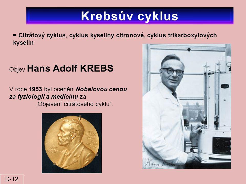 = Citrátový cyklus, cyklus kyseliny citronové, cyklus trikarboxylových kyselin Objev Hans Adolf KREBS V roce 1953 byl oceněn Nobelovou cenou za fyziol