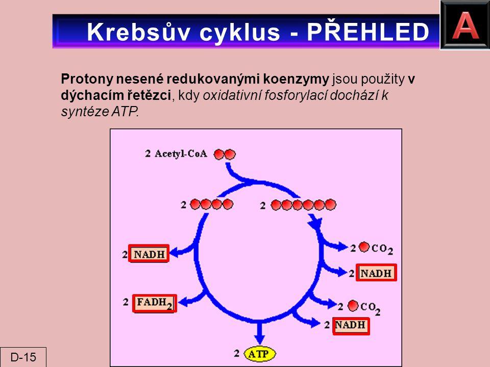 Protony nesené redukovanými koenzymy jsou použity v dýchacím řetězci, kdy oxidativní fosforylací dochází k syntéze ATP. D-15