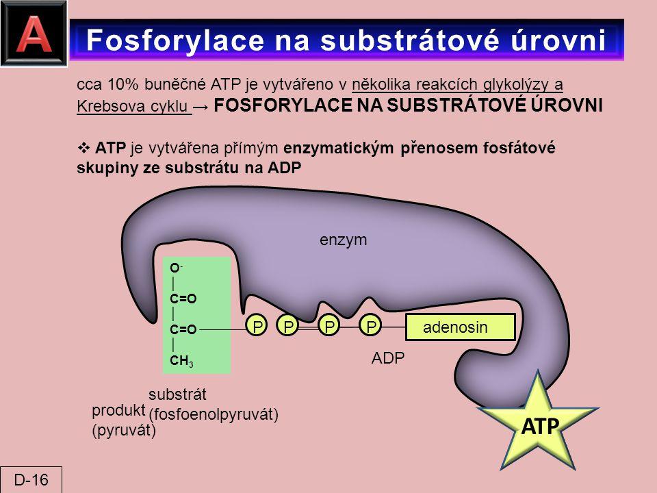cca 10% buněčné ATP je vytvářeno v několika reakcích glykolýzy a Krebsova cyklu → FOSFORYLACE NA SUBSTRÁTOVÉ ÚROVNI  ATP je vytvářena přímým enzymati