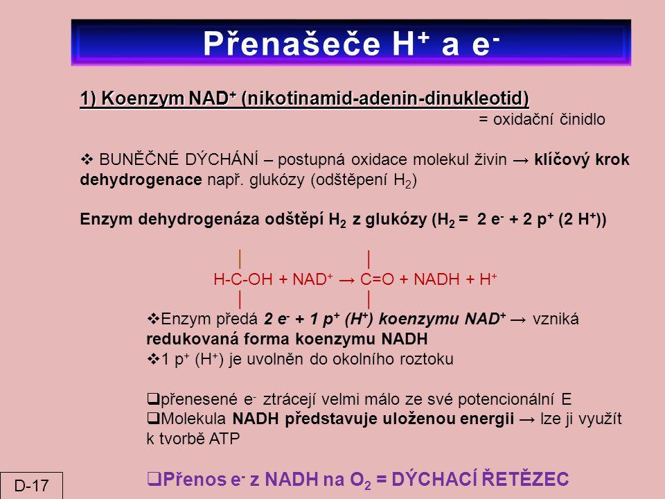 1) Koenzym NAD + (nikotinamid-adenin-dinukleotid) = oxidační činidlo  BUNĚČNÉ DÝCHÁNÍ – postupná oxidace molekul živin → klíčový krok dehydrogenace n