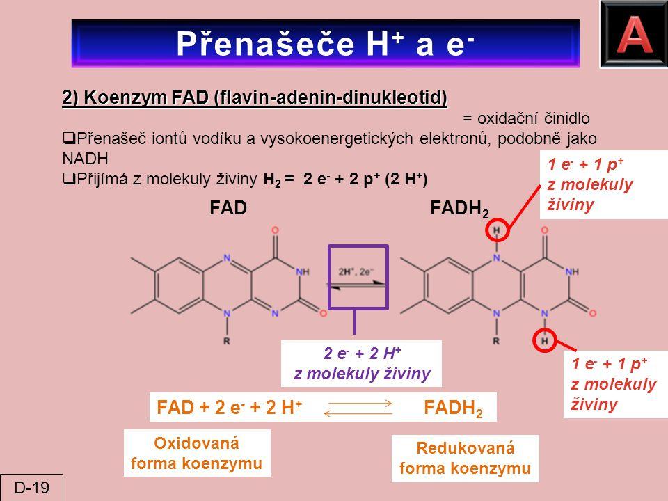 2) Koenzym FAD (flavin-adenin-dinukleotid) = oxidační činidlo  Přenašeč iontů vodíku a vysokoenergetických elektronů, podobně jako NADH  Přijímá z m