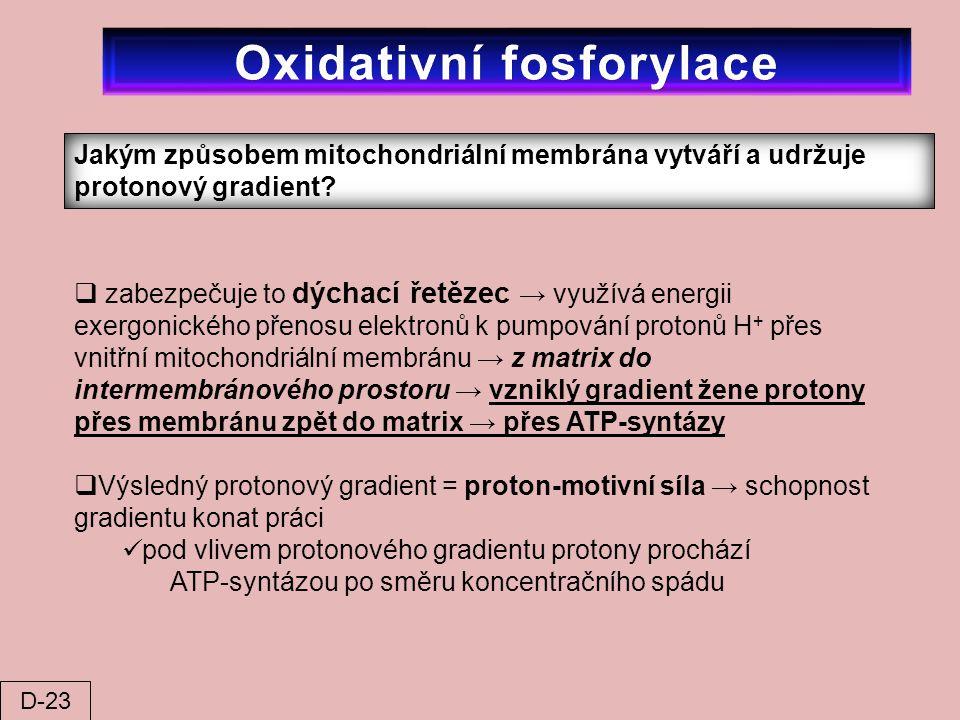 Jakým způsobem mitochondriální membrána vytváří a udržuje protonový gradient?  zabezpečuje to dýchací řetězec → využívá energii exergonického přenosu