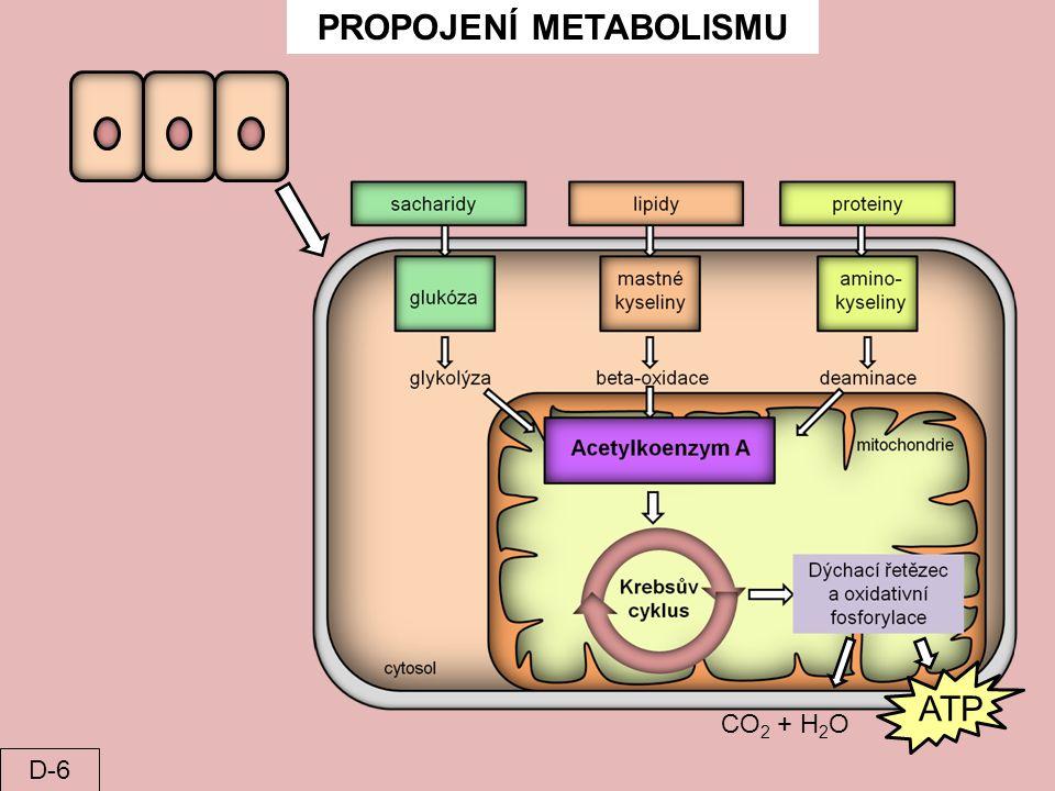 PROPOJENÍ METABOLISMU CO 2 + H 2 O ATP D-6