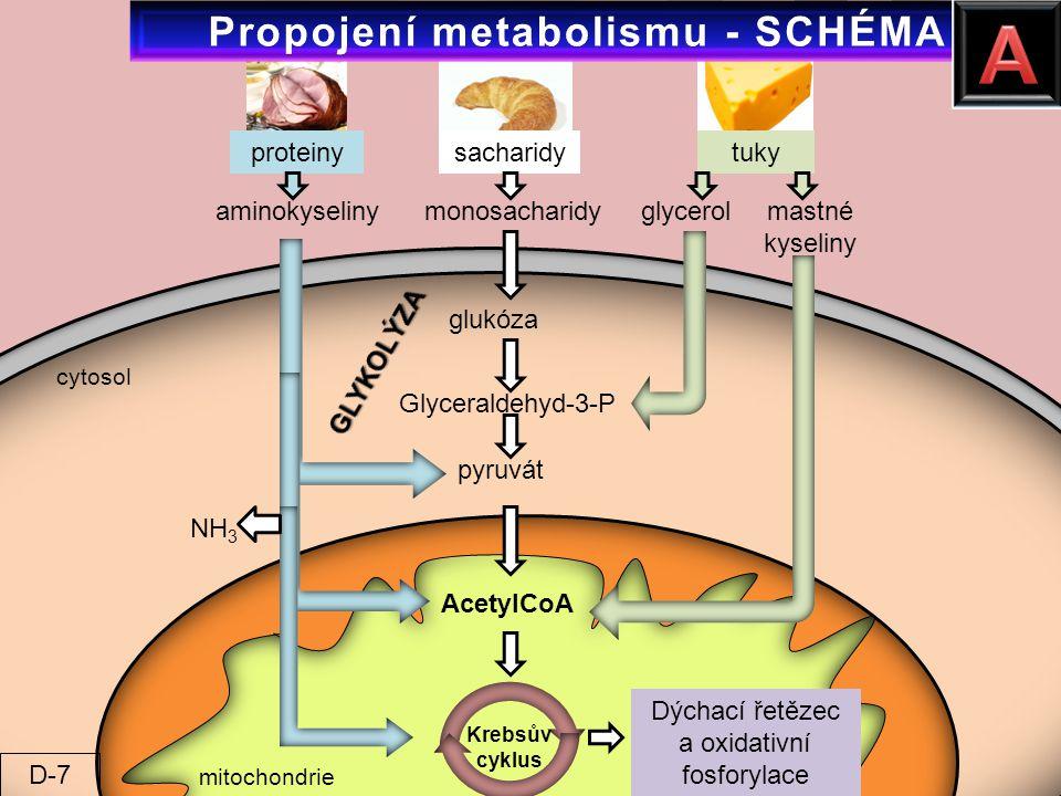 proteinysacharidytuky aminokyselinymonosacharidyglycerolmastné kyseliny glukóza Glyceraldehyd-3-P pyruvát AcetylCoA Dýchací řetězec a oxidativní fosfo