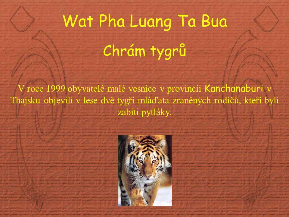 Wat Pha Luang Ta Bua Chrám tygrů V roce 1999 obyvatelé malé vesnice v provincii Kanchanaburi v Thajsku objevili v lese dvě tygří mláďata zraněných rodičů, kteří byli zabiti pytláky.