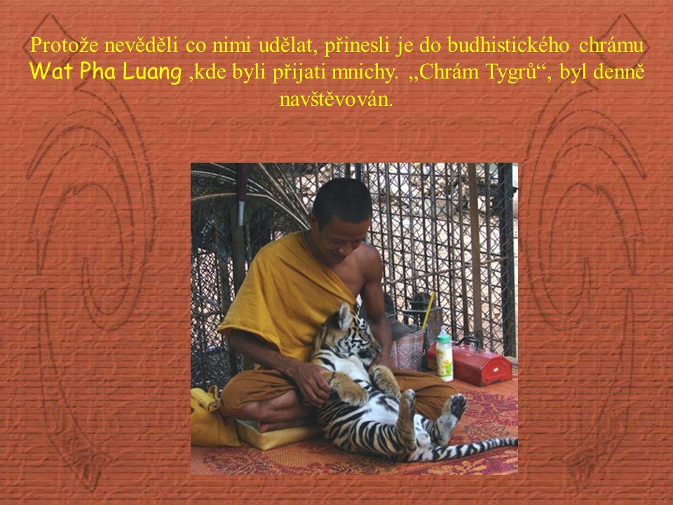 Protože nevěděli co nimi udělat, přinesli je do budhistického chrámu Wat Pha Luang,kde byli přijati mnichy.