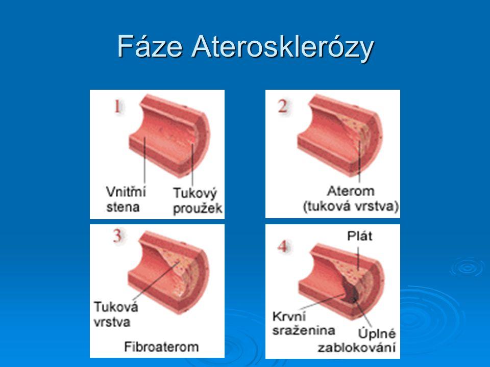 Fáze Aterosklerózy