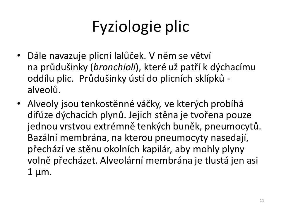 Fyziologie plic Dále navazuje plicní lalůček.