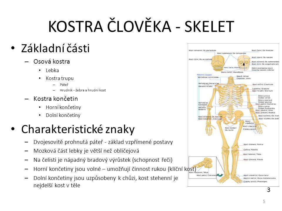 SPOJENÍ KOSTÍ Nepohyblivé (pevné) – pomocí jiné pojivové tkáně vazivem (lebka) - švy v mládí chrupavkou (stydká spona, meziobratlové ploténky mezi těly obratlů) – druhotně srůstem kostí (kost křížová, kost kostrční - srostlé obratle, kosti pánve) – vklínění (upevnění zubu v čelisti) Pohyblivé (kloubní) 6 4