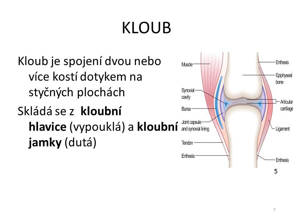 KLOUB Kloub je spojení dvou nebo více kostí dotykem na styčných plochách Skládá se z kloubní hlavice (vypouklá) a kloubní jamky (dutá) 7 5