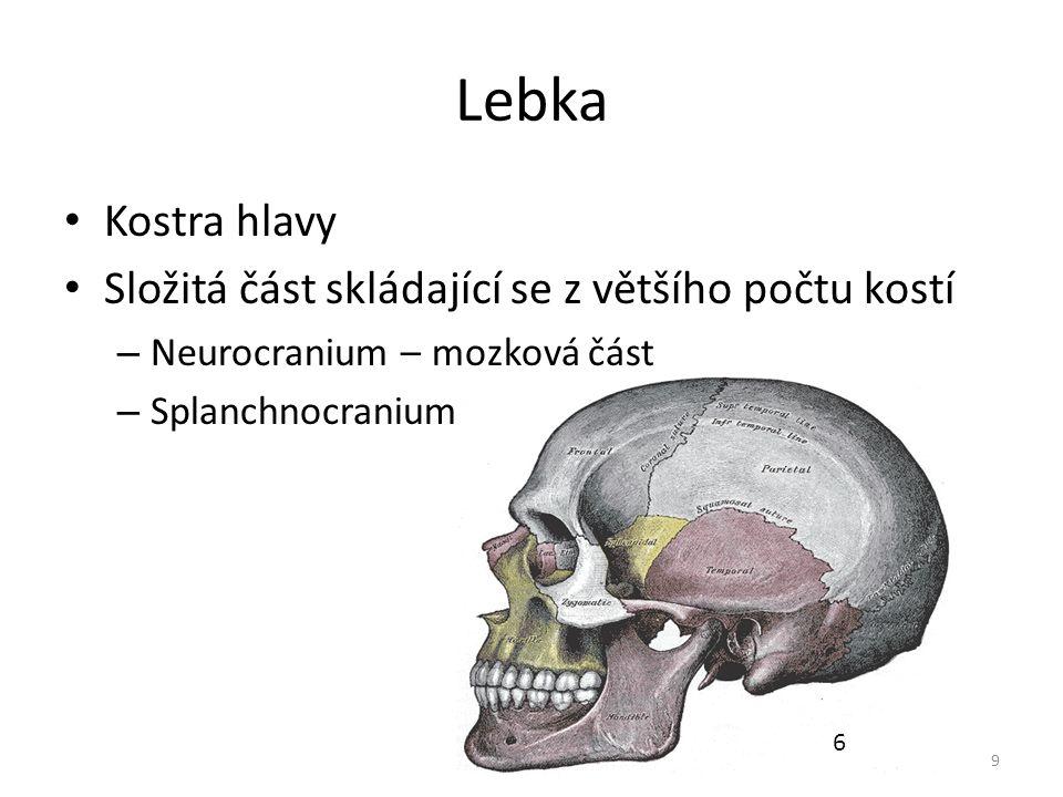 Lebka Kostra hlavy Složitá část skládající se z většího počtu kostí – Neurocranium – mozková část – Splanchnocranium – obličejová část 9 6
