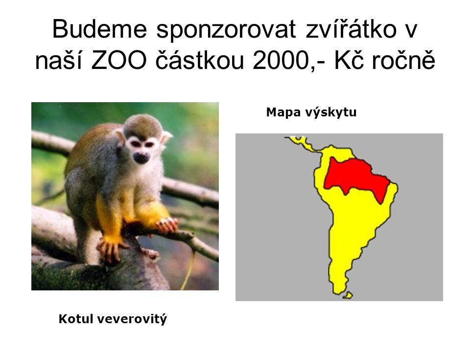 Budeme sponzorovat zvířátko v naší ZOO částkou 2000,- Kč ročně Mapa výskytu Kotul veverovitý