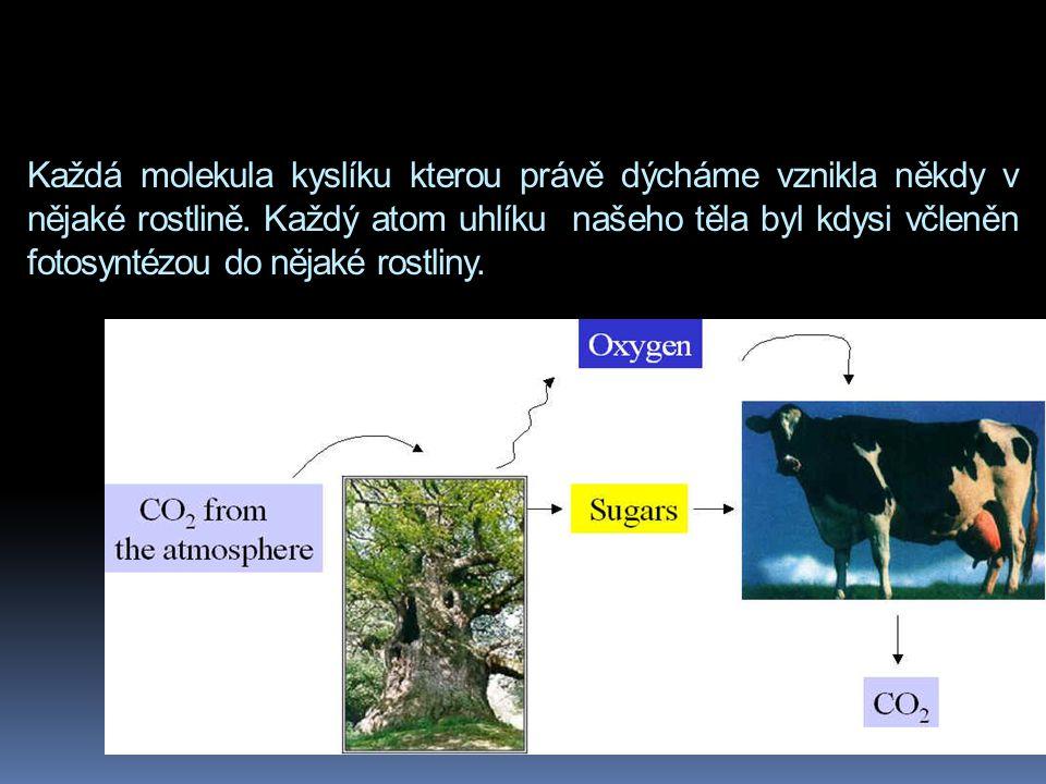 Každá molekula kyslíku kterou právě dýcháme vznikla někdy v nějaké rostlině. Každý atom uhlíku našeho těla byl kdysi včleněn fotosyntézou do nějaké ro
