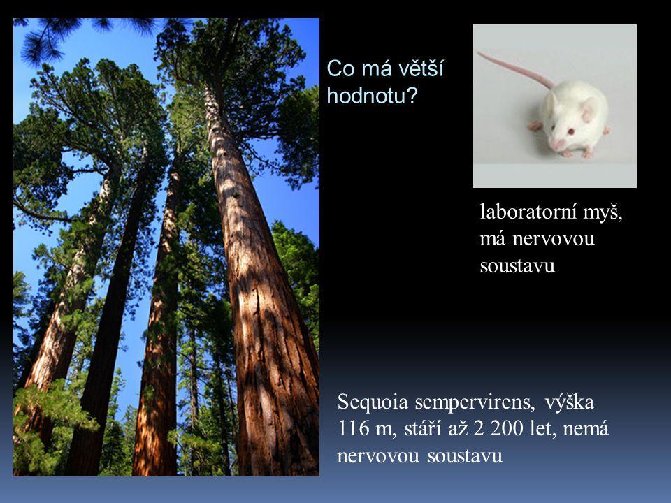 Co má větší hodnotu? Sequoia sempervirens, výška 116 m, stáří až 2 200 let, nemá nervovou soustavu laboratorní myš, má nervovou soustavu