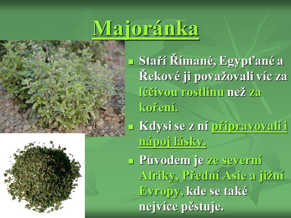 Majoránka Staří Římané, Egypťané a Řekové ji považovali víc za léčivou rostlinu než za koření.