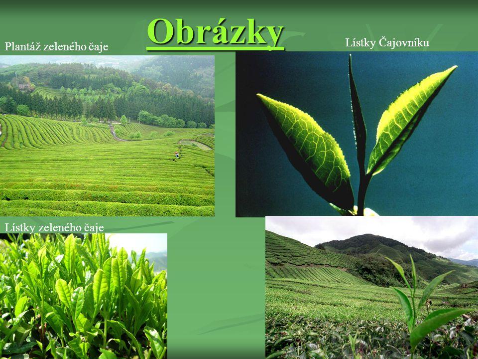 Obrázky Plantáž zeleného čaje Lístky zeleného čaje Lístky Čajovníku