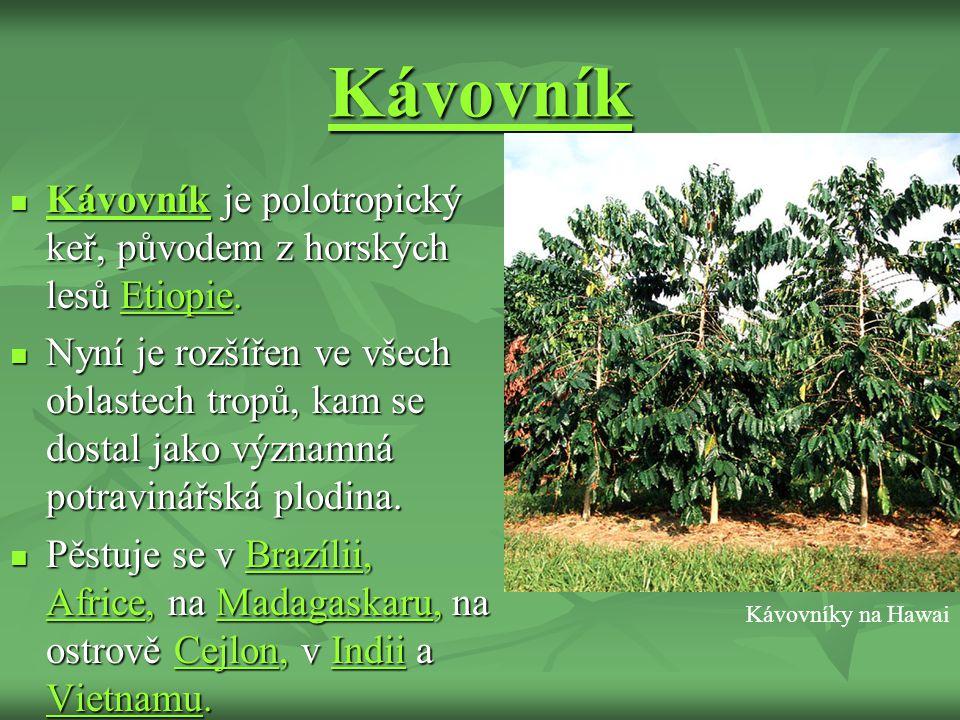 Kávovník Kávovník je polotropický keř, původem z horských lesů Etiopie.