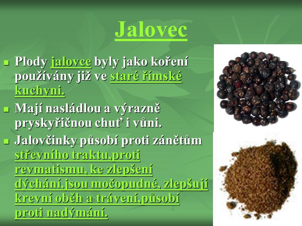 Jalovec Plody jalovce byly jako koření používány již ve staré římské kuchyni.