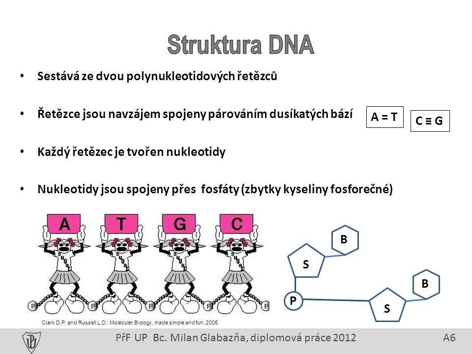 Sestává ze dvou polynukleotidových řetězců Řetězce jsou navzájem spojeny párováním dusíkatých bází Každý řetězec je tvořen nukleotidy Nukleotidy jsou spojeny přes fosfáty (zbytky kyseliny fosforečné) PřF UP Bc.
