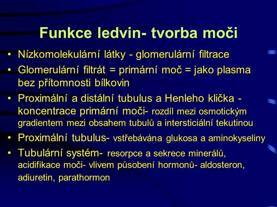 Funkce ledvin- tvorba moči Nízkomolekulární látky - glomerulární filtrace Glomerulární filtrát = primární moč = jako plasma bez přítomnosti bílkovin P
