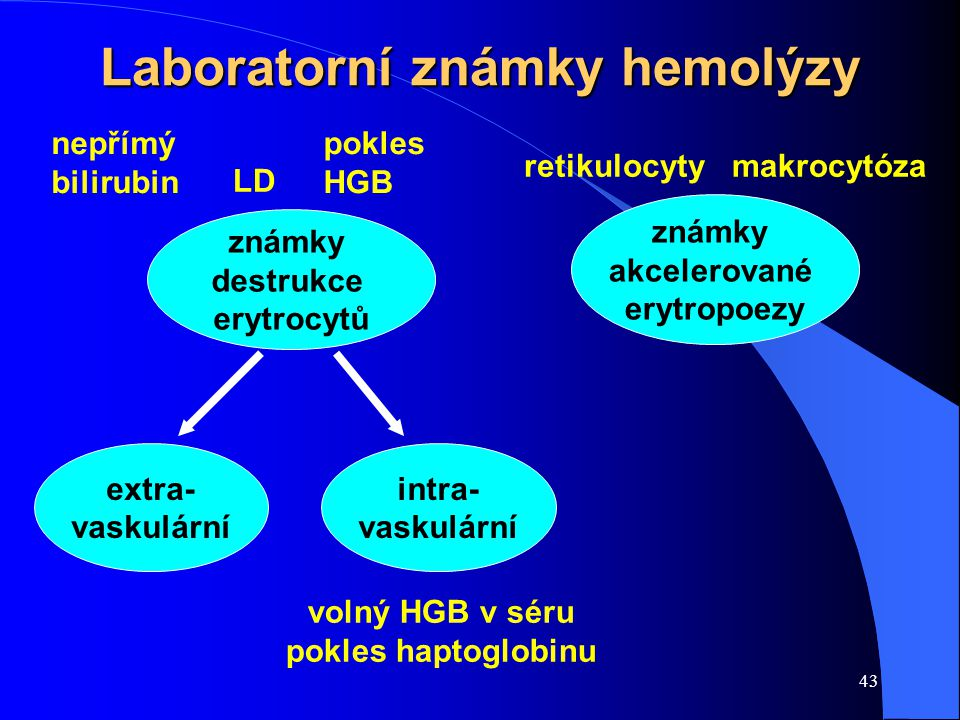 43 Laboratorní známky hemolýzy známky destrukce erytrocytů extra- vaskulární známky akcelerované erytropoezy intra- vaskulární nepřímý bilirubin retikulocyty LD volný HGB v séru pokles haptoglobinu pokles HGB makrocytóza