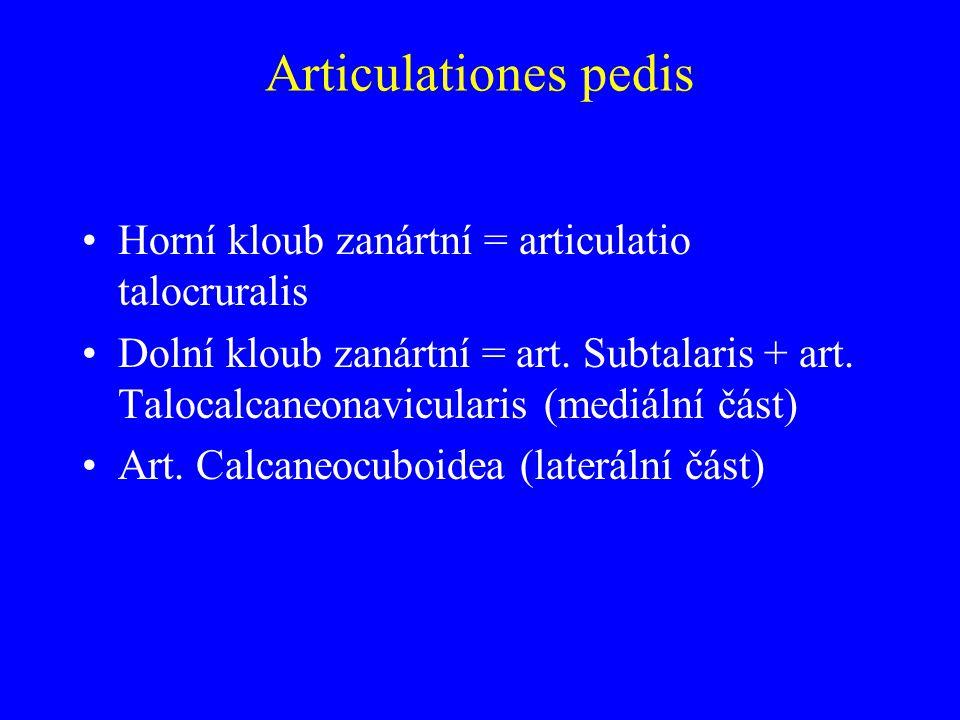 Articulationes pedis Horní kloub zanártní = articulatio talocruralis Dolní kloub zanártní = art.