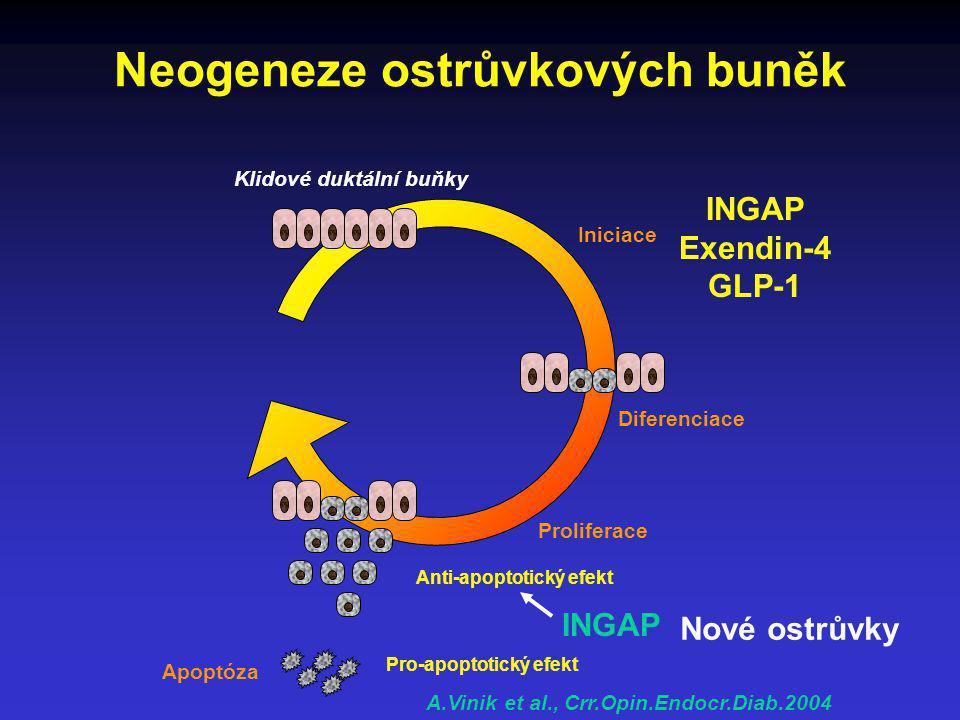 Neogeneze ostrůvkových buněk Iniciace Proliferace Diferenciace Anti-apoptotický efekt Apoptóza Pro-apoptotický efekt Klidové duktální buňky INGAP Exen