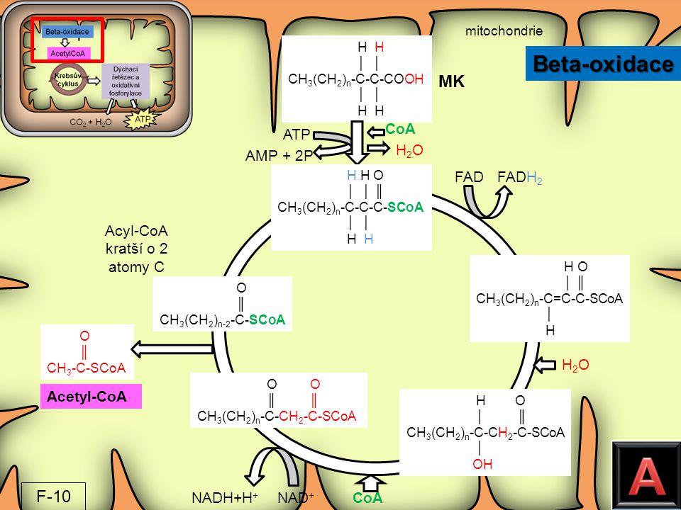 mitochondrie H H │ │ CH 3 (CH 2 ) n -C-C-COOH │ │ H H O ║ CH 3 -C-SCoA H H O │ │ ║ CH 3 (CH 2 ) n -C-C-C-SCoA │ │ H H H O │ ║ CH 3 (CH 2 ) n -C=C-C-SC
