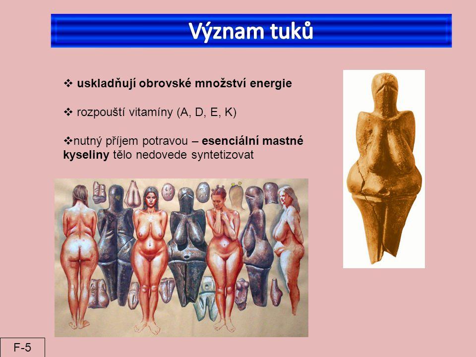  uskladňují obrovské množství energie  rozpouští vitamíny (A, D, E, K)  nutný příjem potravou – esenciální mastné kyseliny tělo nedovede syntetizov