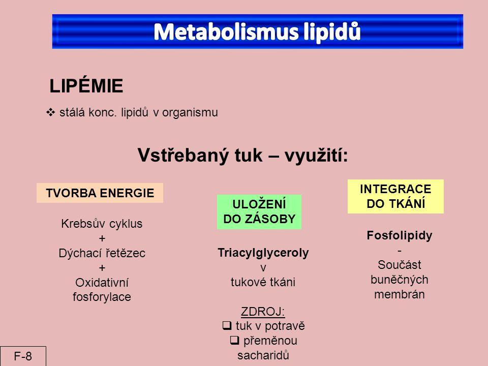  stálá konc. lipidů v organismu Vstřebaný tuk – využití: LIPÉMIE TVORBA ENERGIE Krebsův cyklus + Dýchací řetězec + Oxidativní fosforylace ULOŽENÍ DO