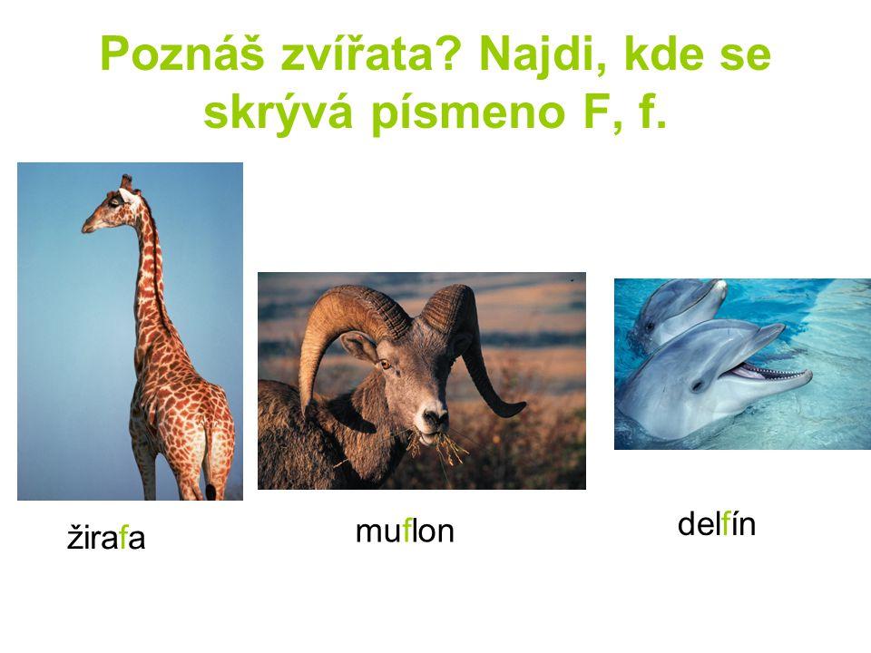 Poznáš zvířata? Najdi, kde se skrývá písmeno F, f. žirafa muflon delfín
