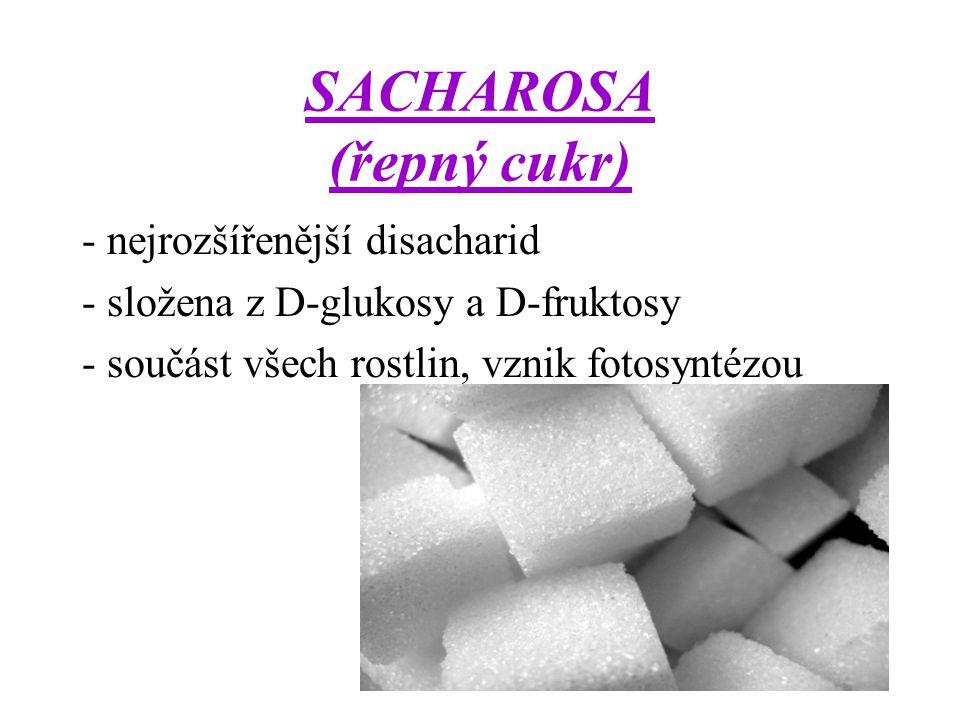 SACHAROSA (řepný cukr) - nejrozšířenější disacharid - složena z D-glukosy a D-fruktosy - součást všech rostlin, vznik fotosyntézou