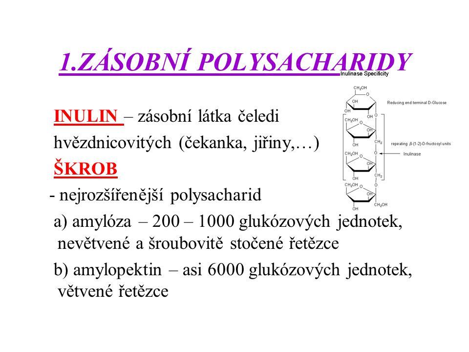 1.ZÁSOBNÍ POLYSACHARIDY INULIN – zásobní látka čeledi hvězdnicovitých (čekanka, jiřiny,…) ŠKROB - nejrozšířenější polysacharid a) amylóza – 200 – 1000 glukózových jednotek, nevětvené a šroubovitě stočené řetězce b) amylopektin – asi 6000 glukózových jednotek, větvené řetězce