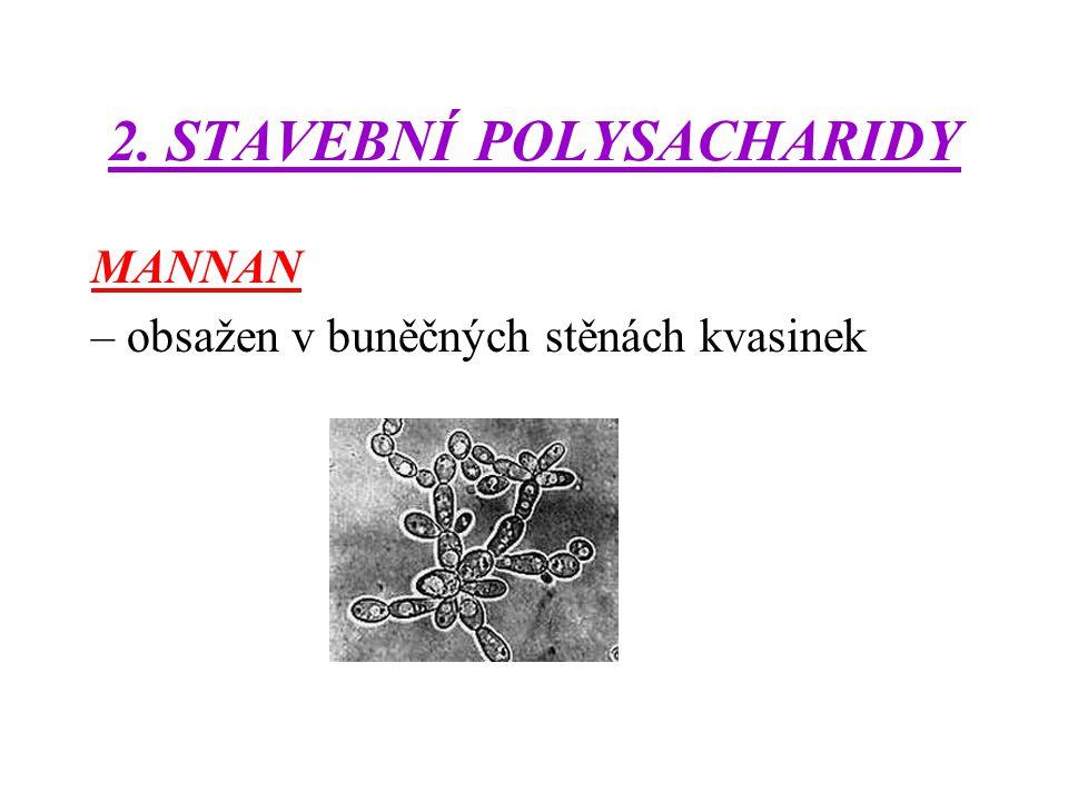 2. STAVEBNÍ POLYSACHARIDY MANNAN – obsažen v buněčných stěnách kvasinek