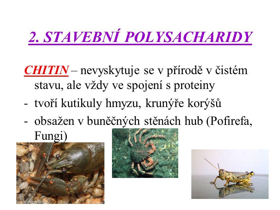 2. STAVEBNÍ POLYSACHARIDY CHITIN – nevyskytuje se v přírodě v čistém stavu, ale vždy ve spojení s proteiny -tvoří kutikuly hmyzu, krunýře korýšů -obsa