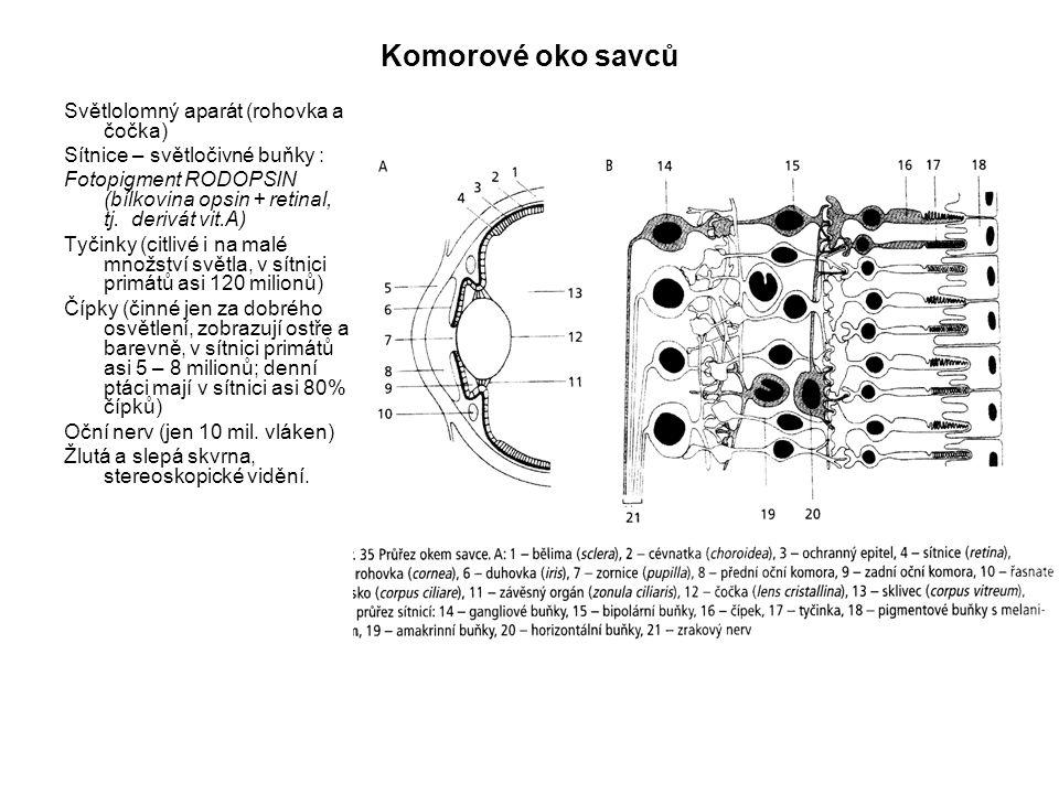 Komorové oko savců Světlolomný aparát (rohovka a čočka) Sítnice – světločivné buňky : Fotopigment RODOPSIN (bílkovina opsin + retinal, tj. derivát vit