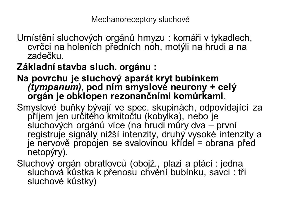 Mechanoreceptory sluchové Umístění sluchových orgánů hmyzu : komáři v tykadlech, cvrčci na holeních předních noh, motýli na hrudi a na zadečku. Základ