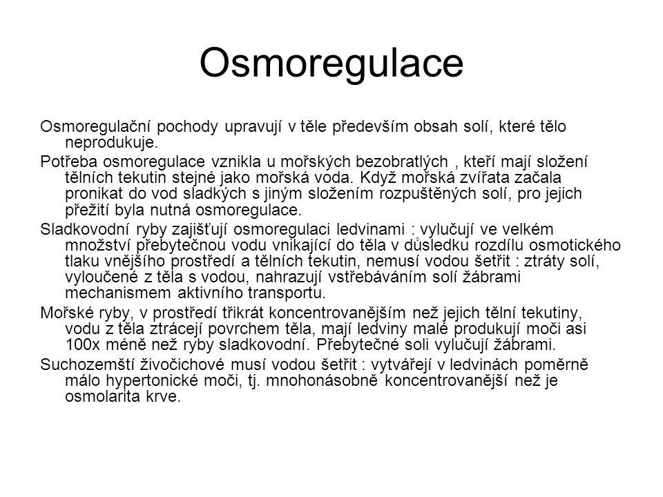 Osmoregulace Osmoregulační pochody upravují v těle především obsah solí, které tělo neprodukuje. Potřeba osmoregulace vznikla u mořských bezobratlých,