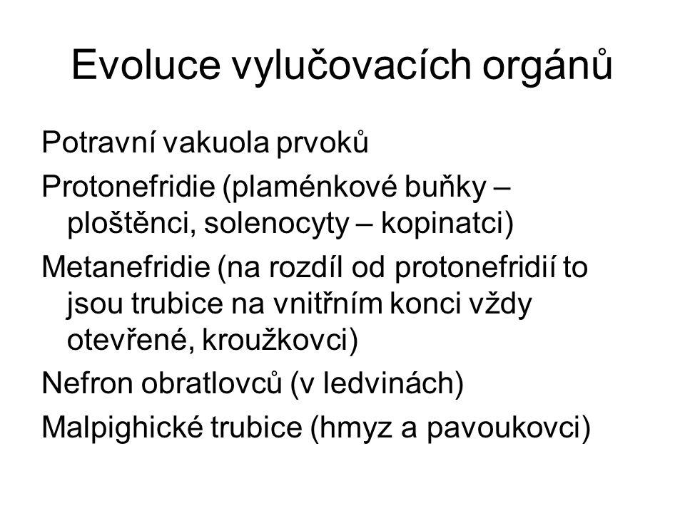 Evoluce vylučovacích orgánů Potravní vakuola prvoků Protonefridie (plaménkové buňky – ploštěnci, solenocyty – kopinatci) Metanefridie (na rozdíl od protonefridií to jsou trubice na vnitřním konci vždy otevřené, kroužkovci) Nefron obratlovců (v ledvinách) Malpighické trubice (hmyz a pavoukovci)