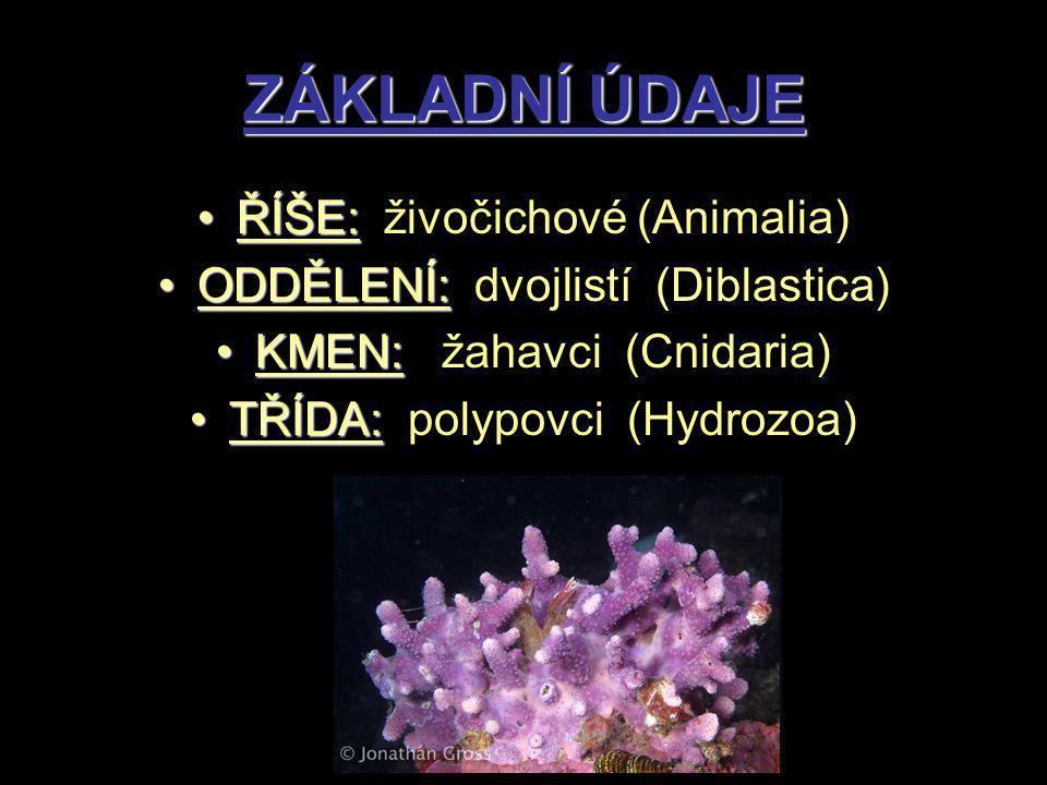 ZÁKLADNÍ ÚDAJE ŘÍŠE:ŘÍŠE: živočichové (Animalia) ODDĚLENÍ:ODDĚLENÍ: dvojlistí (Diblastica) KMEN:KMEN: žahavci (Cnidaria) TŘÍDA:TŘÍDA: polypovci (Hydrozoa)