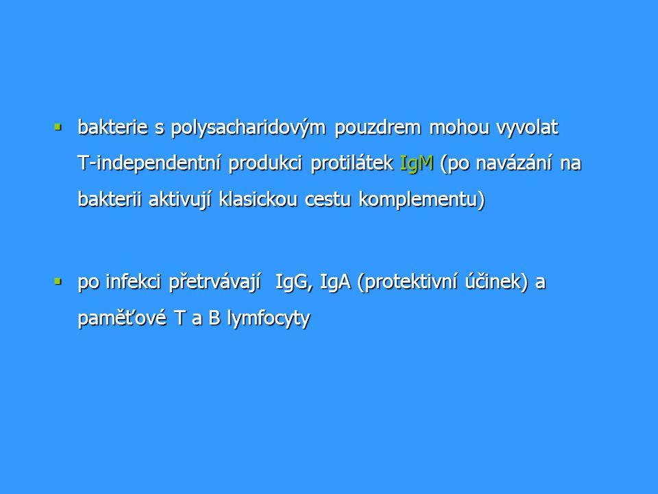  bakterie s polysacharidovým pouzdrem mohou vyvolat T-independentní produkci protilátek IgM (po navázání na bakterii aktivují klasickou cestu komplementu)  po infekci přetrvávají IgG, IgA (protektivní účinek) a paměťové T a B lymfocyty