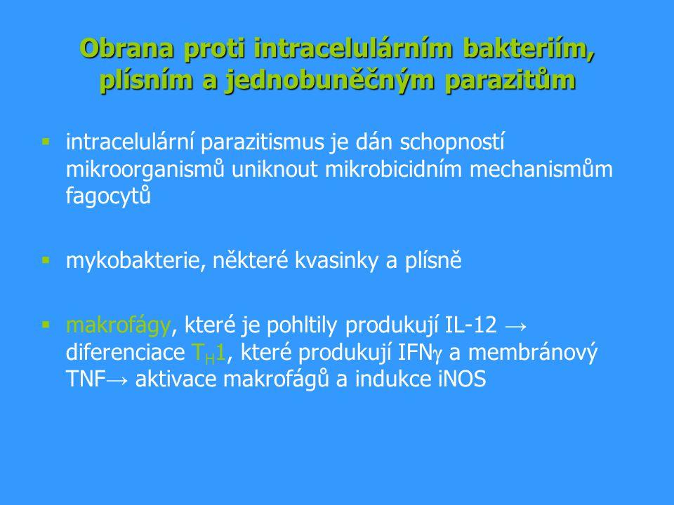 Obrana proti intracelulárním bakteriím, plísním a jednobuněčným parazitům  intracelulární parazitismus je dán schopností mikroorganismů uniknout mikrobicidním mechanismům fagocytů  mykobakterie, některé kvasinky a plísně  makrofágy, které je pohltily produkují IL-12 → diferenciace T H 1, které produkují IFN  a membránový TNF → aktivace makrofágů a indukce iNOS