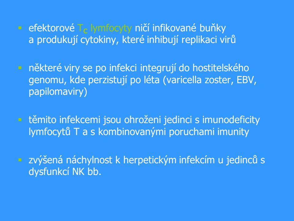  efektorové T C lymfocyty ničí infikované buňky a produkují cytokiny, které inhibují replikaci virů  některé viry se po infekci integrují do hostite