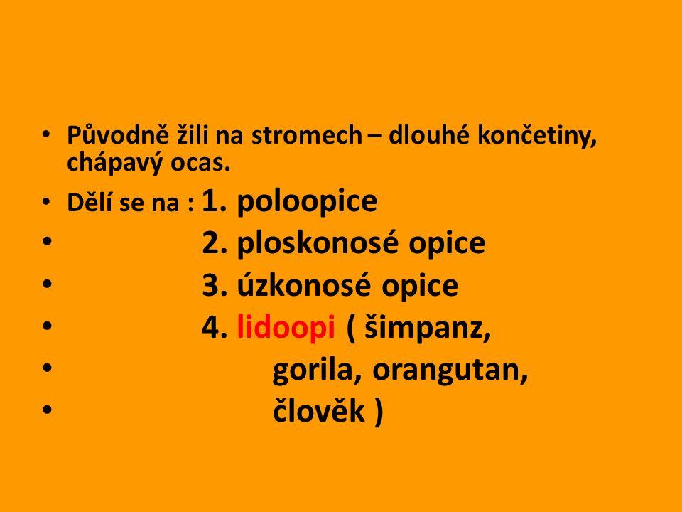 Zdroje : http://is.muni.cz/do/1499/el/estud/prif/ps09/ kruh/web/pages/01-primati.html http://is.muni.cz/do/1499/el/estud/prif/ps09/ kruh/web/pages/01-primati.html http://www.biolib.cz/cz/taxonimage/id58029/ http://kisspanda.rajce.idnes.cz/ZOO_Liberec_ 27.10.08/ http://kisspanda.rajce.idnes.cz/ZOO_Liberec_ 27.10.08/ http://ucivo.webnode.cz/album/primati/kock odan-obecny-opice-uzkonose-jpg/ http://ucivo.webnode.cz/album/primati/kock odan-obecny-opice-uzkonose-jpg/ http://cs.wikipedia.org/wiki/Gibon_lar