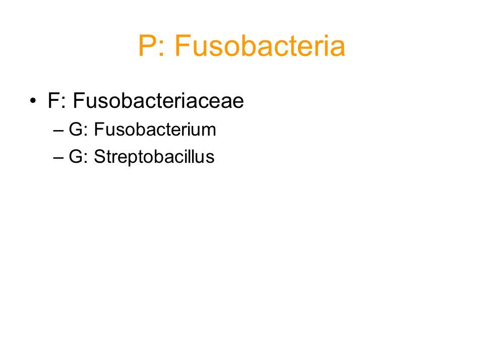 P: Fusobacteria F: Fusobacteriaceae –G: Fusobacterium –G: Streptobacillus