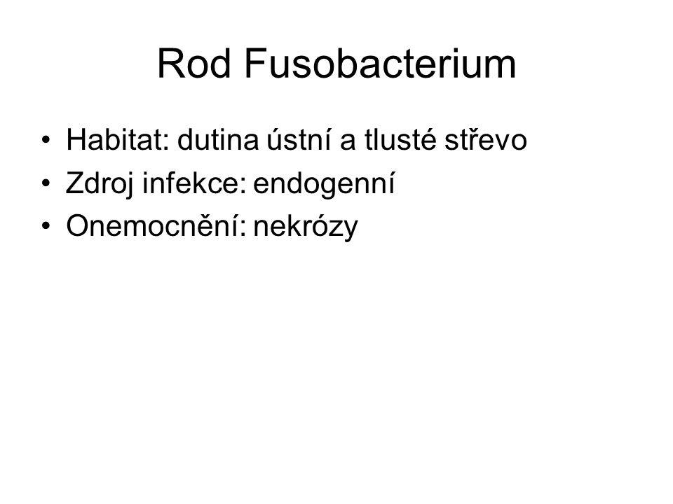 Rod Fusobacterium Habitat: dutina ústní a tlusté střevo Zdroj infekce: endogenní Onemocnění: nekrózy